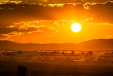 Irrigation in field at sunset in Picabo, Idaho, USA