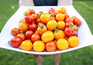 Woman holding plate of cherry tomatoes