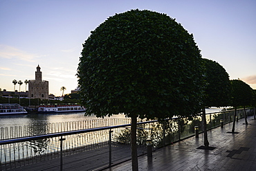 Trees on footpath with Torre del Oro in distance in Seville, Spain