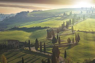 Trees along winding road in Tuscany, Italy
