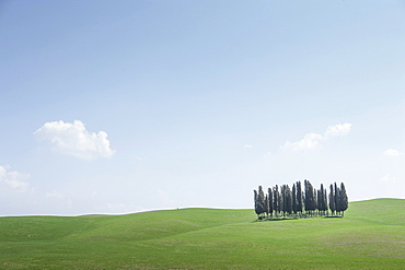 Trees on hill in Tuscany, Italy