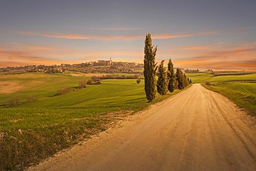 Cypress trees by dirt road at sunset in Tuscany, Italy