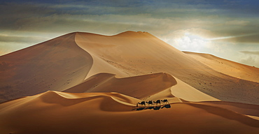 Man with camels in desert in Abu Dhabi, United Arab Emirates