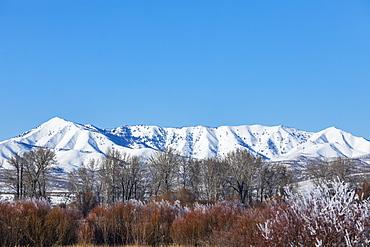 Snowcapped mountain behind trees, Bellevue, Idaho, USA