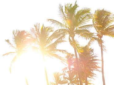 Palm trees against sunlight and clear sky, Miami, Florida, USA