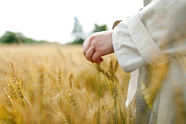 Hand of woman in wheat field