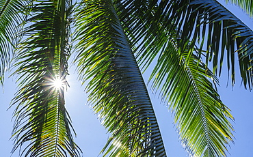 Palm fronds under sun
