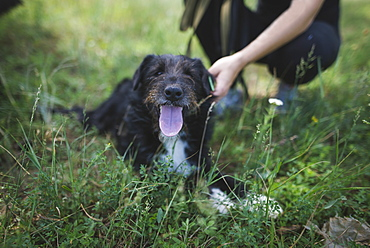 Young woman with dog from animal shelter relaxing in grass