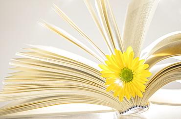 Yellow flower in open book