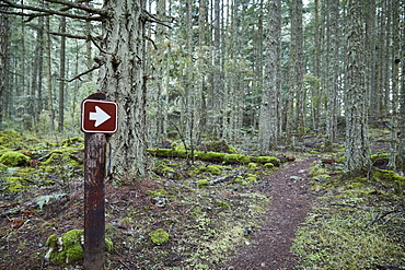 USA, Washington, San Juan County, Orcas Island, Path in forest