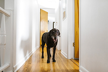 Dog standing in hallway