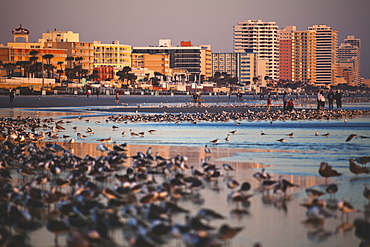 USA, Florida, Daytona Beach, Beach at sunrise