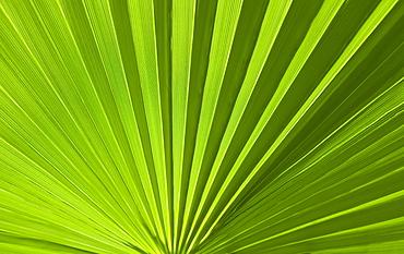 Closeup of green foliage