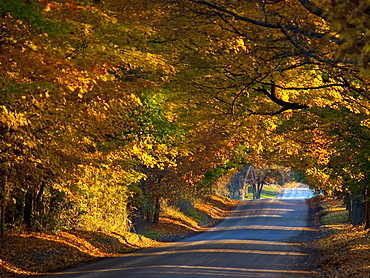 United Kingdom, England, Road in autumn forest