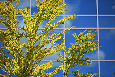USA, Washington, Seattle, Tree against sky reflected in glass facade