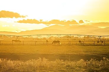 USA, Idaho, Picabo, Horses grazing in rural pasture at sunset