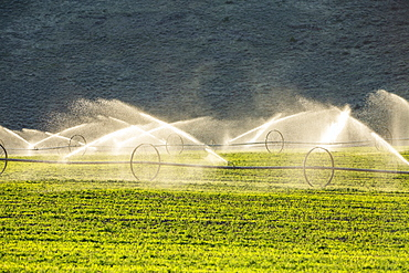 USA, Idaho, Picabo, Irrigation equipment watering new crops