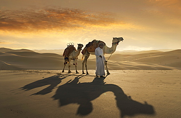 United Arab Emirates, Dubai, Man leading camels in desert