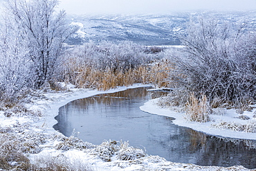 USA, Idaho, Bellevue, Snowy winter landscape with creek among trees