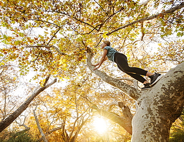 United States, California, Mission Viejo, Low angle view of girl (12-13) climbing tree in forest at sunset