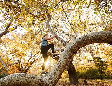 United States, California, Mission Viejo, Girl (12-13) climbing tree in forest at sunset