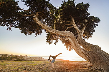 United States, California, Cambria, Girl (12-13) doing handstand near tree in landscape at sunset
