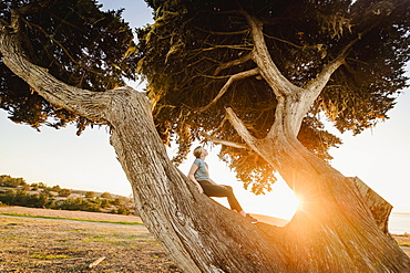 United States, California, Cambria, Girl (12-13) sitting on tree in landscape at sunset