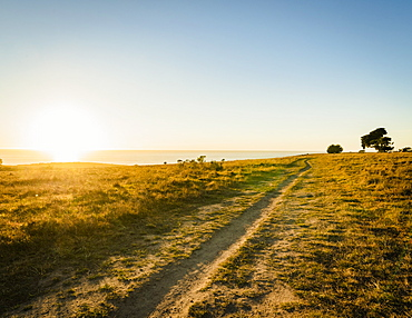 United States, California, Cambria, Grassy field and blue sky at sunset