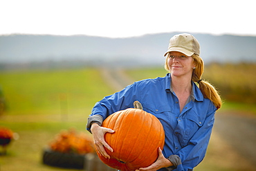 United States, Virginia, Woman harvesting pumpkins