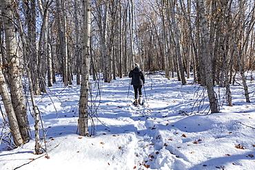 United States, Idaho, Bellevue, Senior woman snowshoeing