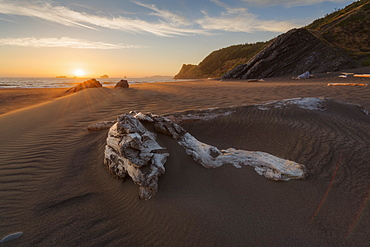 United States, Oregon, Driftwood in sand on beach at sunset