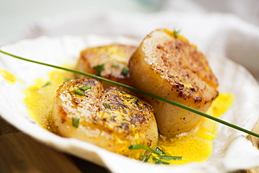 Scallops in butter sauce in seashell