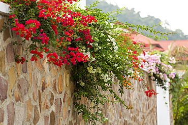 Wall with colorful flowers, Kep, Cambodia