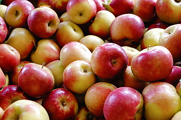 Stack of fresh red apples