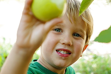 Close up of boy picking green apple on fruit farm