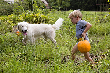 Boy with dog carrying heavy pumpkin on fruit farm