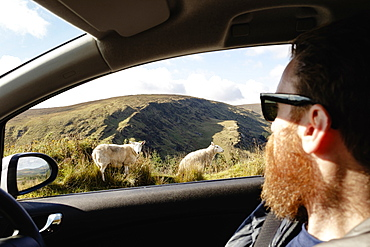 Mid adult man looking at sheep through car window