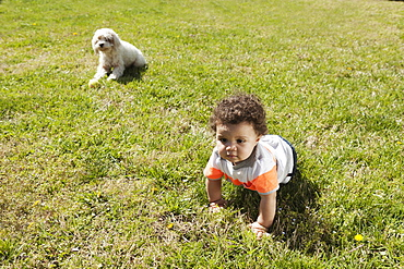 Child crawling on grass, dog in background