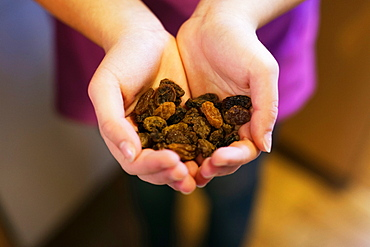 Cupped hands holding raisins, close-up