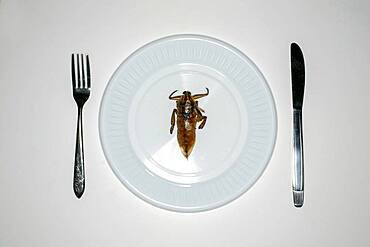 Overhead view of insect in plate for dinner