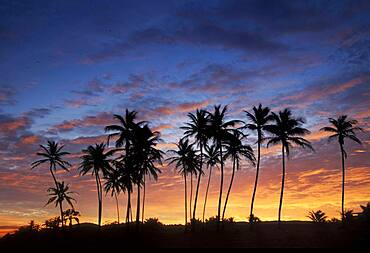 USA, Puerto Rico, Caribbean, Silhouettes of palm trees against sky at sunset