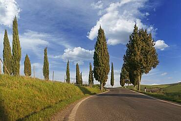 Italy, Tuscany, Val D'Orcia, Pienza, Cypresses along empty road in landscape