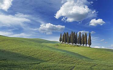 Italy, Tuscany, Val D'Orcia, San Quirico, Cypresses on green hill