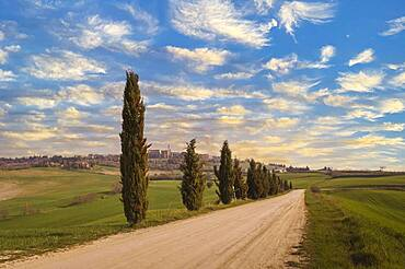 Italy, Tuscany, Val D'Orcia, Pienza, Cypresses along dirt road in landscape at sunset