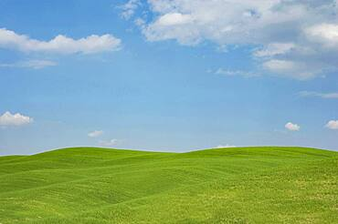 Italy, Tuscany, Val D'Orcia, Green hills under blue sky