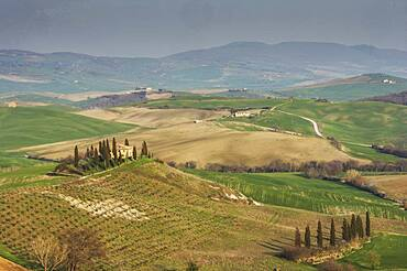 Italy, Tuscany, Val D'Orcia, Pienza, Aerial view of hills and fields with cypress trees
