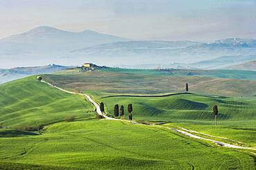 Italy, Tuscany, Val D'Orcia, Dirt road crossing green hills