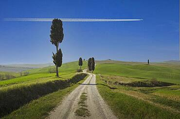 Italy, Tuscany, Val D'Orcia, Airplane flying over dirt road among cypresses