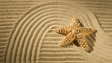 Closeup of starfish on sand