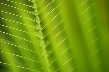 Closeup of fronds